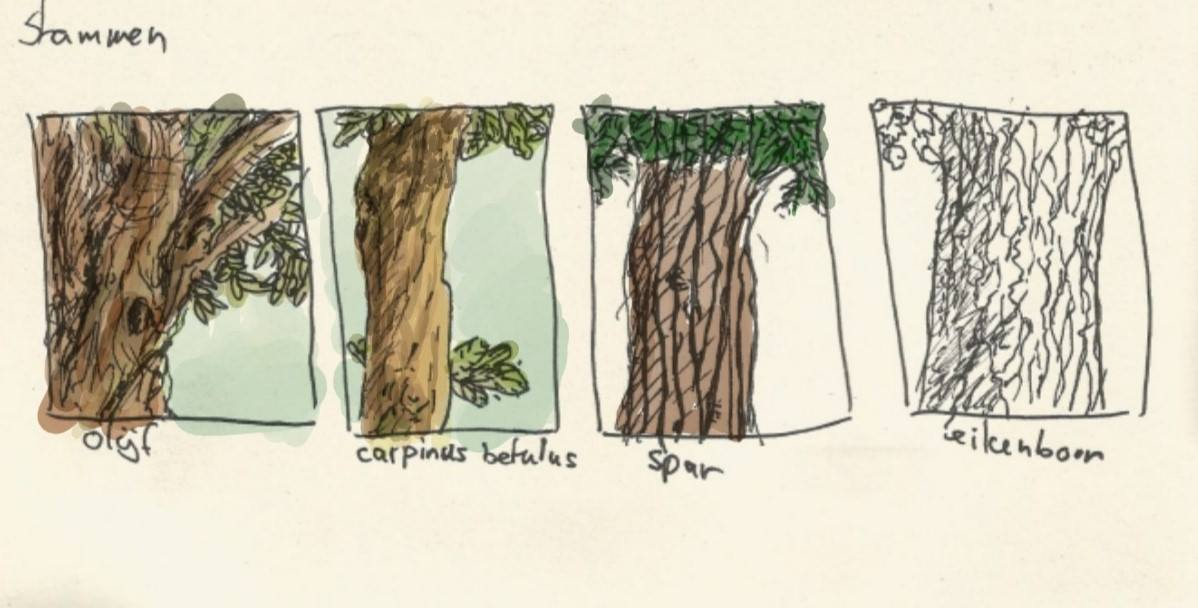 Differend tree trunks
